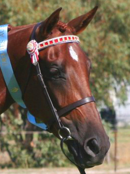 http://www.magicbrowbands.com.au/images/colours/chest3.jpg